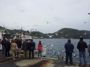 gabbiani barca