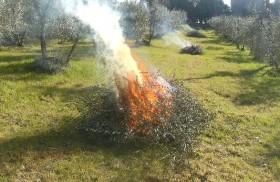 bruciare-potature-agricole-280x182