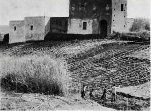 Stromboli, una vigna di malvasia. Sullo sfondo case abbandonate