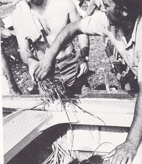 eoliana pesca 3