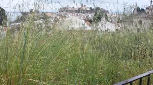 cimitero erba