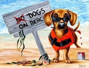 no cani in spiaggia