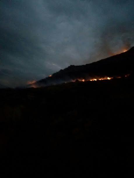 incendio palmeto 2