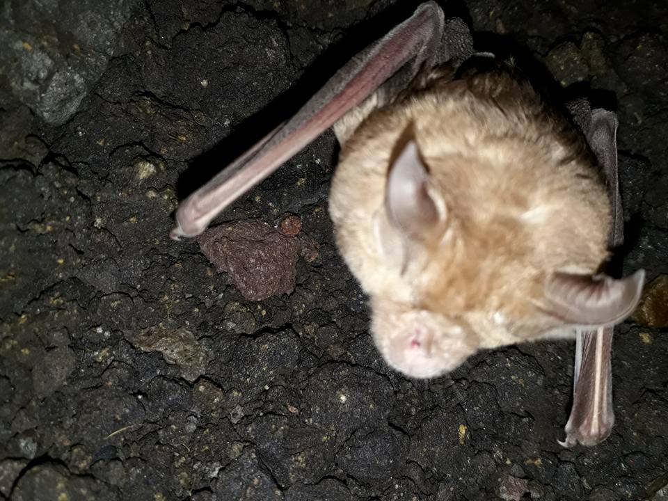 riserva pipistrello 3