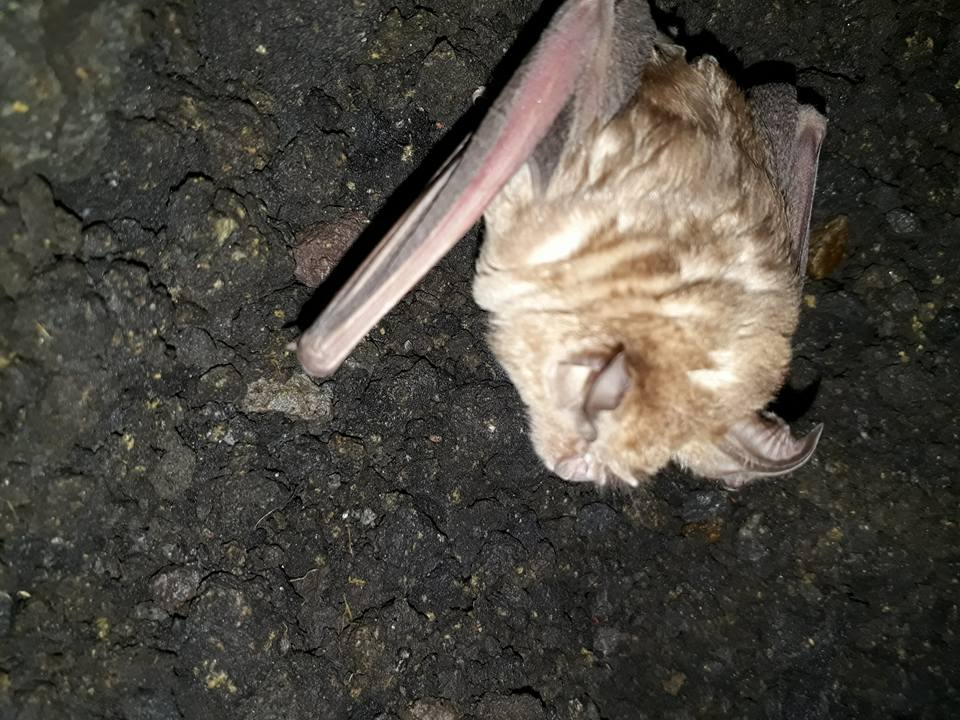 riserva pipistrello 4