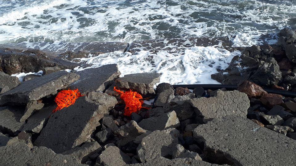 Vulcano : dalle mareggiate, oltre ai danni, la carcassa di un piccolo delfino 1