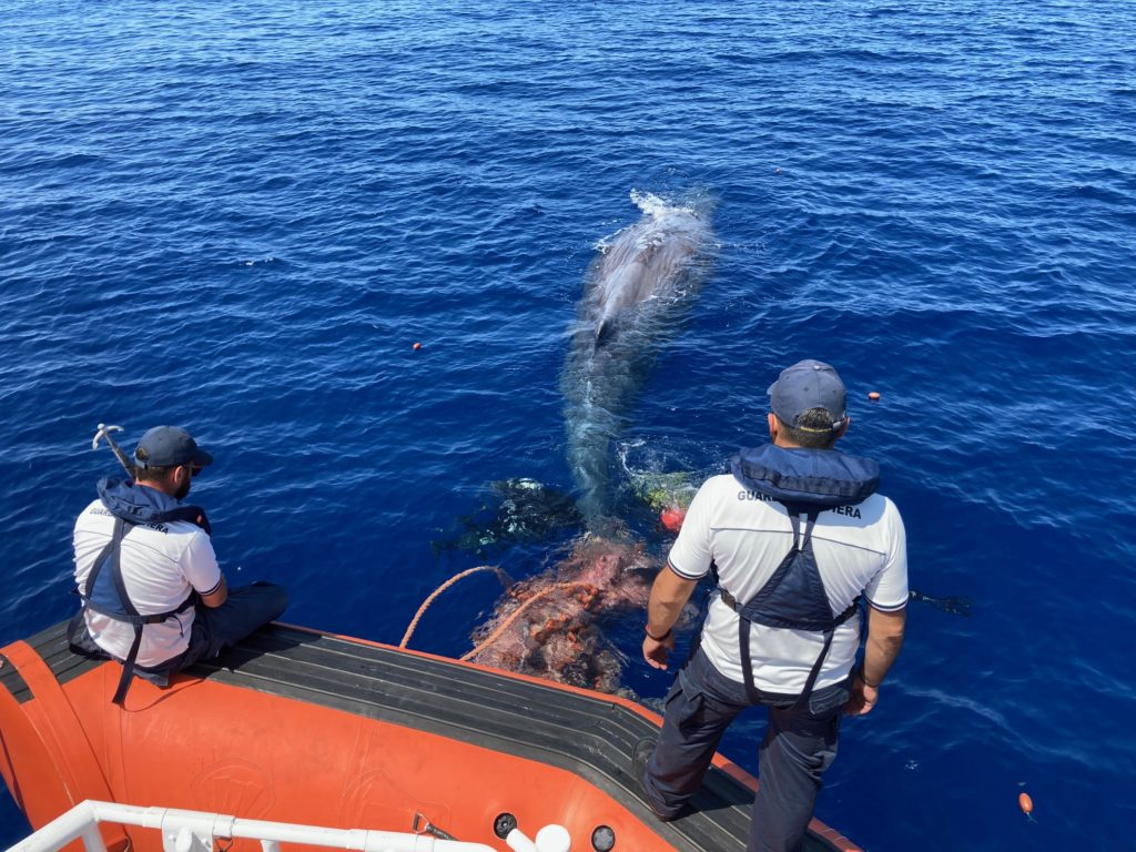 Eolie, soccorso capodoglio intrappolato in una rete da pesca 2
