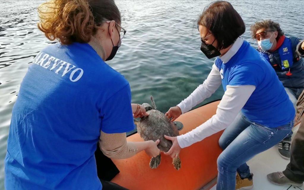 Liberata tartaruga nell'Amp di Milazzo