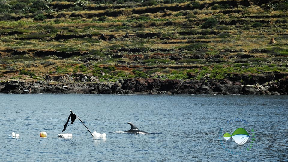 Filicudi Wildlife Conservation : l'Amp per ripopolare il pesce per i delfini e per i pescatori